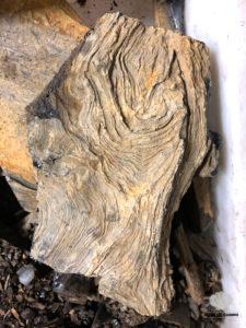 Azabache tronco madera